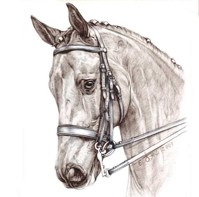 Equesterpferd