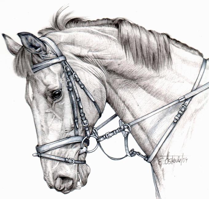 Pferd vom Walter 2