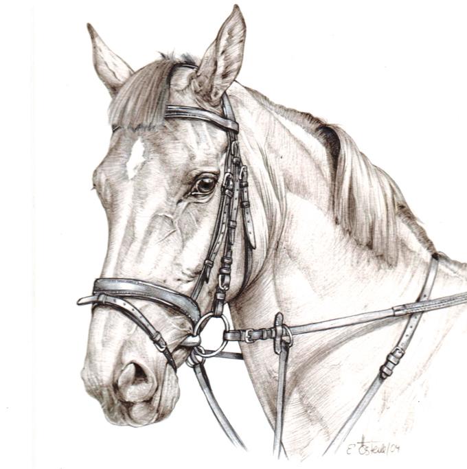 Pferd vom Walter