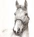 Das Vielseitigkeitspferd